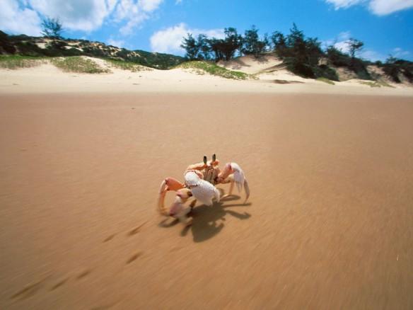 crab-mozambique