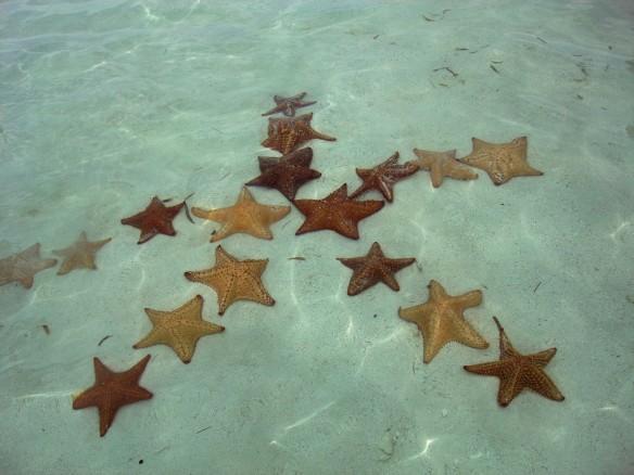 starfish-star