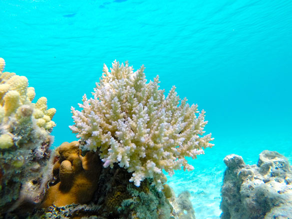 18 Diving Sites Closed to Save Coral Reefs, Thailand