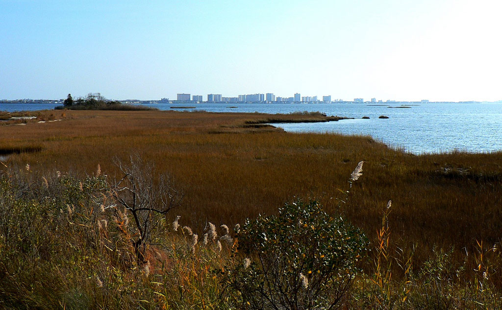 Why Restoring Wetlands  Is More Critical Than Ever