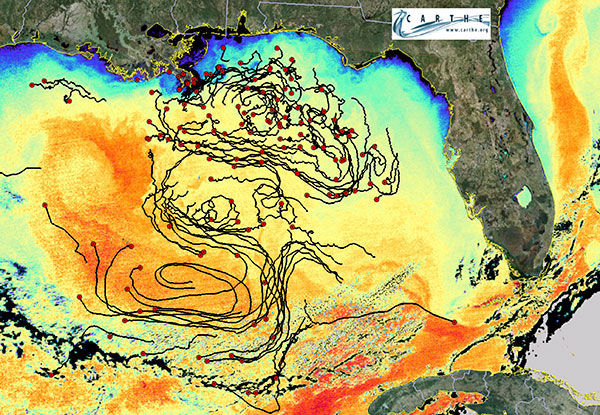Study at Deepwater Horizon Spill Site Finds Key to Tracking Pollutants