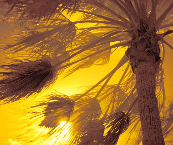 wind-palm-tree