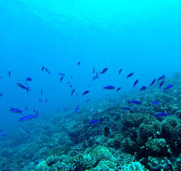 blue-fishes-coastal-care