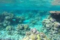 Historical nautical maps show loss of coral reefs