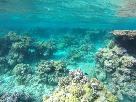 coral-coastal-care-2