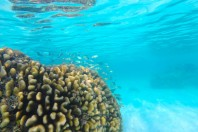 Worldwide change in shallow reef ecosystems predicted as waters warm