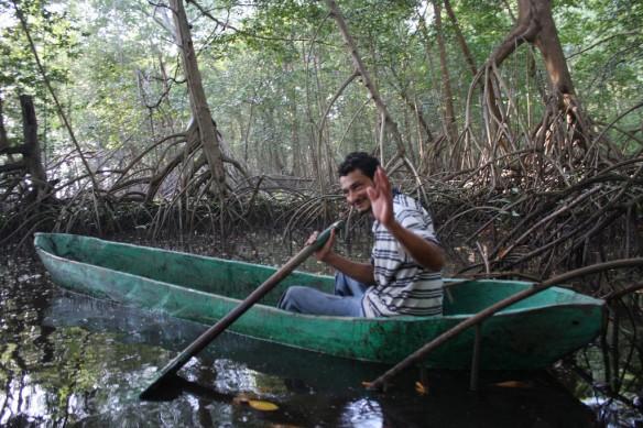 mangrove-jilisco