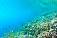 ocean-coastal-care