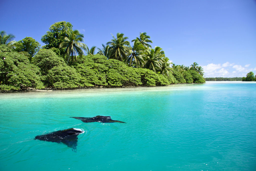 Palmyra Atoll Pictures: Part of the World's Largest Marine Reserve