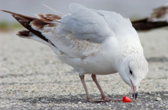 plastic-pollution-coastal-care-seabird