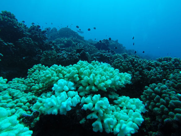 coral-bleaching-coastal-care