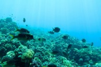 Some Coral Reefs Less Vulnerable to Rising Sea Temperatures