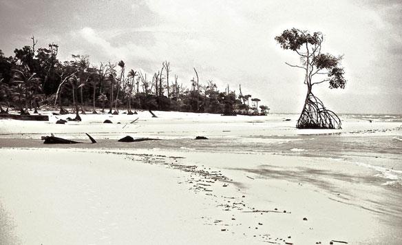 mangrove-brazil