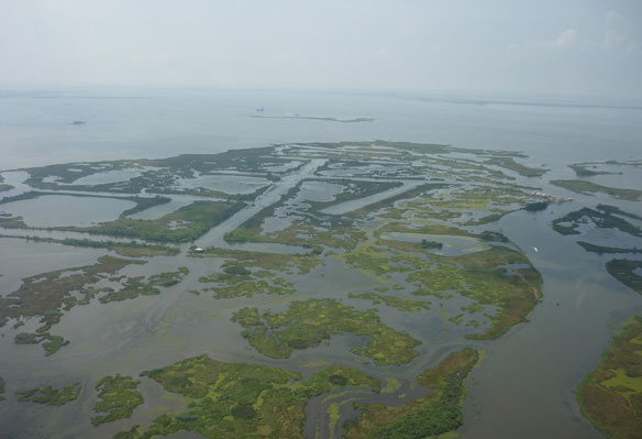 Mississippi river delta marshes have hit a tipping point, study finds