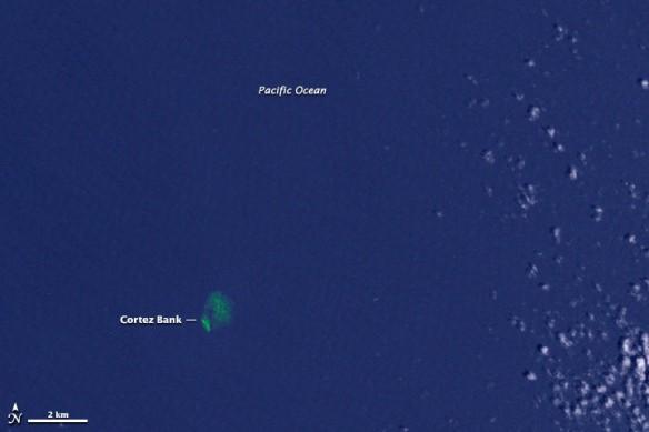 cortez-kelp