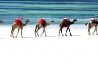 Sand Dredging Threatening Tourism at Top-Rated Kenya Beach