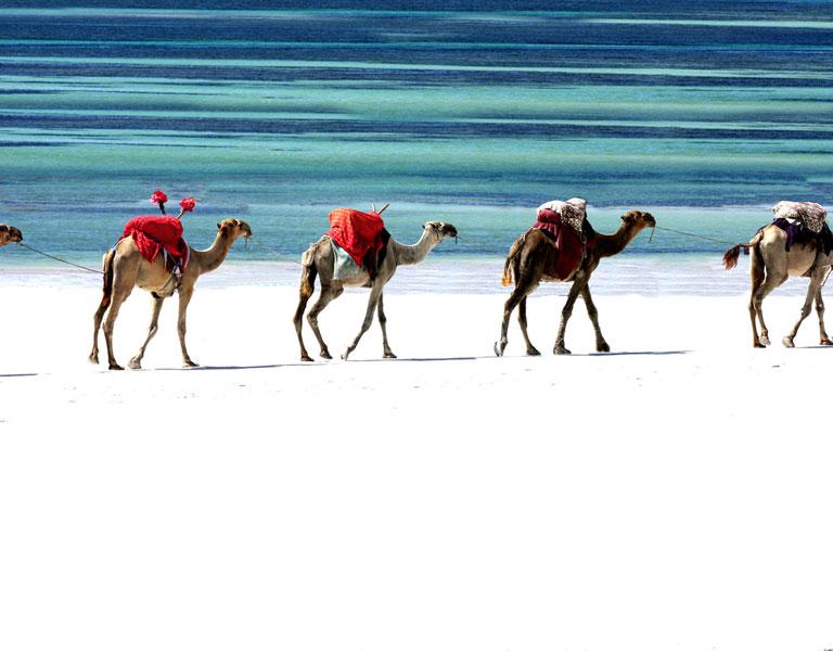 Kenya: Leave the sand on Diani Beach