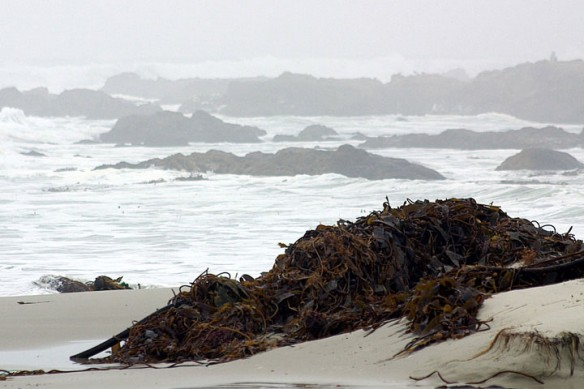 kelp-beach-nasa