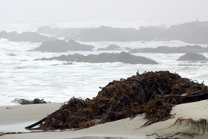 Seaweed Might Have The Power To Make The Oceans Less Acidic