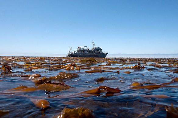 kelp-canopy