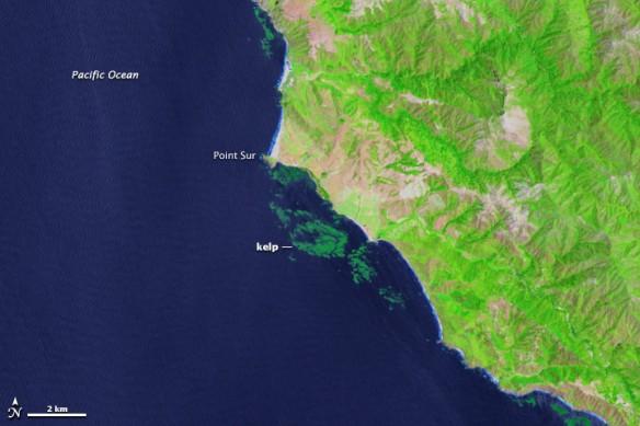 kelp-map