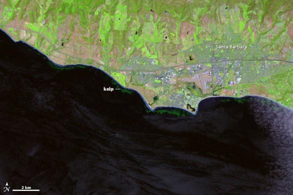 kelp-map-santa-barbara