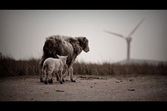 uk-windfarm