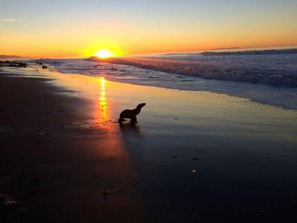 sea-lion-bb