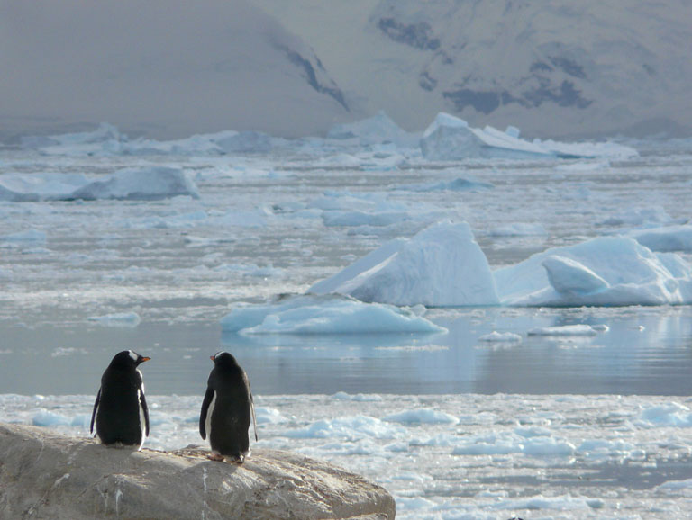Water streaming across Antarctica surprises, worries scientists
