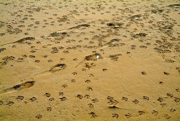sand-steps