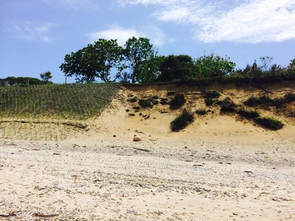 coastal-restoration-nyc