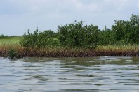 Oil Still Fouling Louisiana Marshes