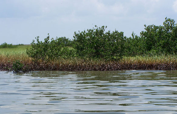NOAA Announces Long-Term Gulf of Mexico Ecosystem Research Priorities