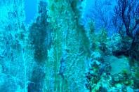 coral-blue-cc