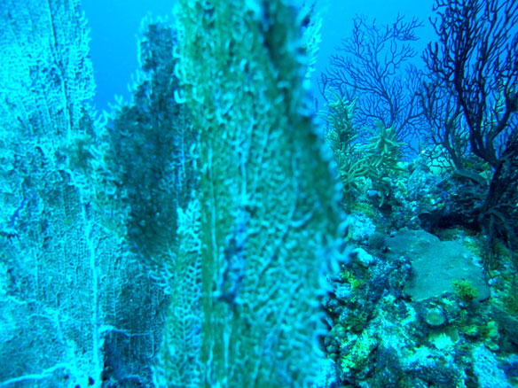 Diverse Corals Persist, But Bioerosion Escalates in Palau's Low-pH Waters