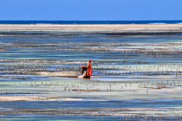 Seagrass' strong potential for curbing erosion