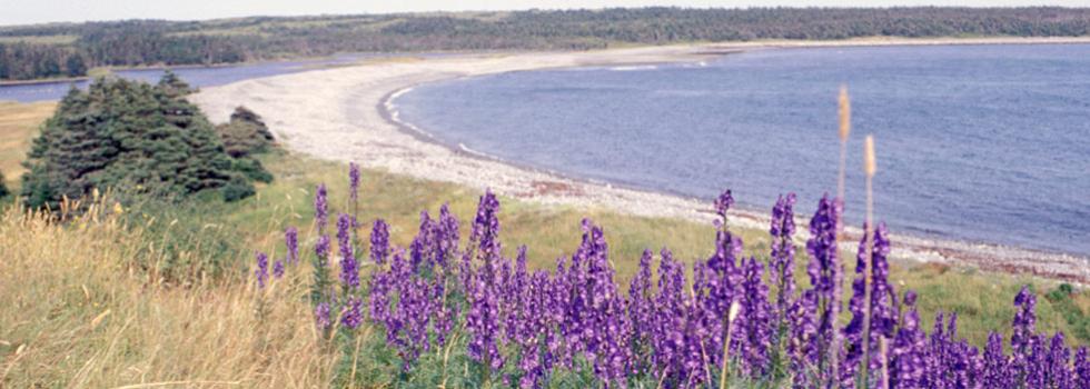 Newfoundland's Sandy Beaches: A Glacial Legacy