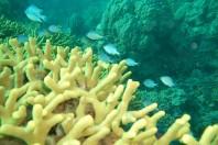Snail and Coral Destruction