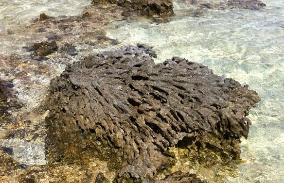 coral-dead