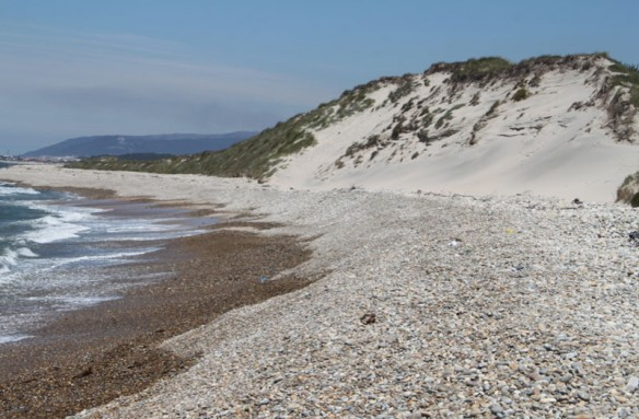 Belinho Beach, NW Portugal: An Example of Rapid Beach Change; By H. Granja & J.L.S. Pinho