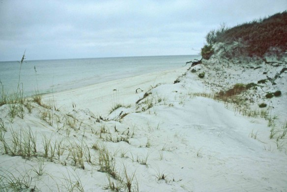 Cape San Blas, Florida; By Celie Dailey