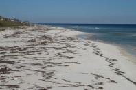 Dog Island, Florida; By Orrin H. Pilkey & Norma Longo