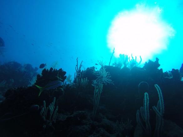 blue-dark-coral