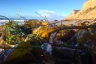 "Pacific Ocean ""blob"" fed massive toxic algae bloom"