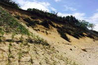 Readers' view: natural vegetation helps limit beach erosion