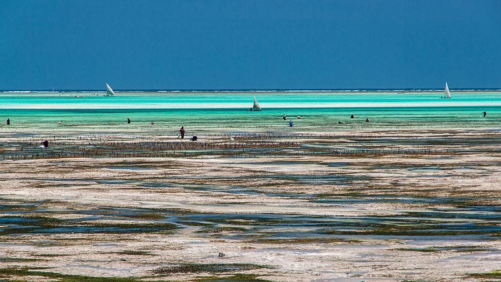 Tanzania, Zanzibar: Illegal Sand Mining Irks Aakia Officials