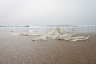 Modern art is rubbish: strange and beautiful photos of beach detritis