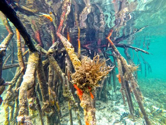 POM-panama-bird-mangrove-max