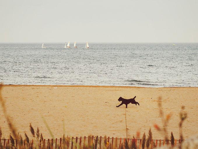 Beaches shrinking as Lake Michigan rises to near-record level