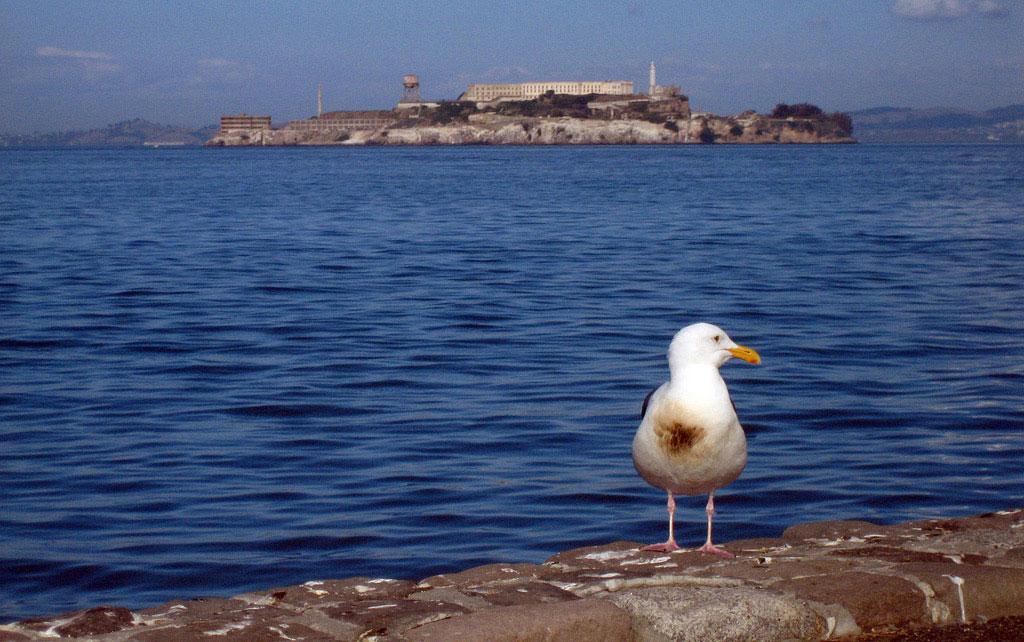 Small offshore oil spills put seabirds at risk